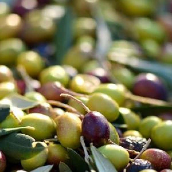 olives-253264_960_720
