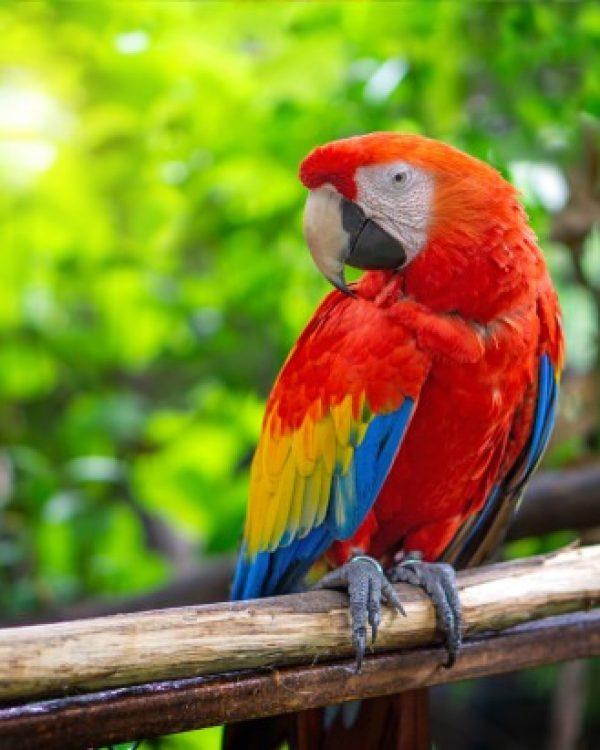 tourisme-montoison-zoo-upie